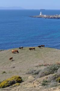 La Isla de Tarifa - territorios - J.A. Maldonado
