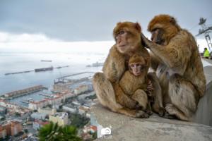 gibraltar - monos- territorios-maldonado