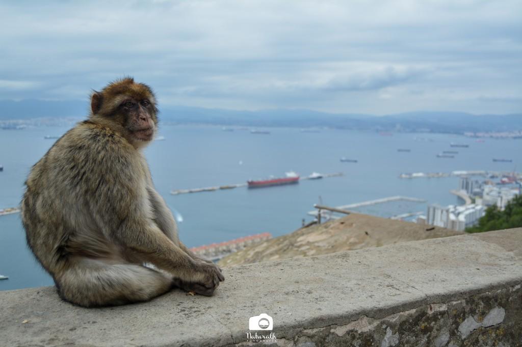 monos - estrecho - territorios - maldonado